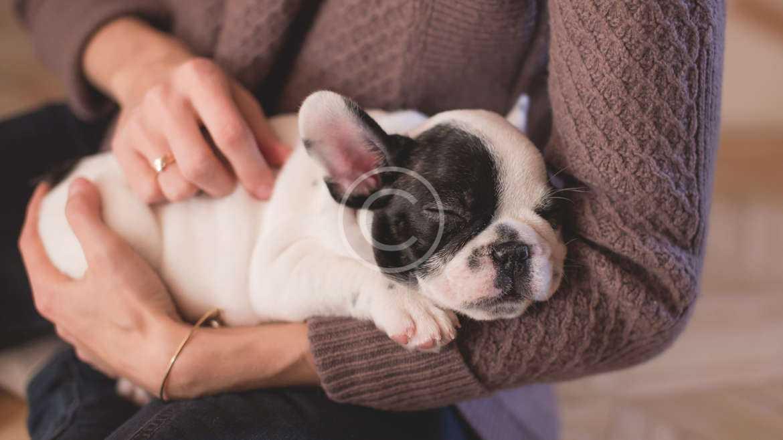 Dog genes give insight into human brain tumors