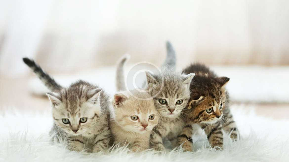 Cats do not harm children's mental health, study finds