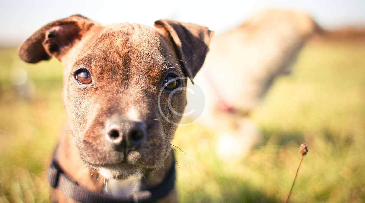 Dog Paws and Why they Don't Get Cold Feet
